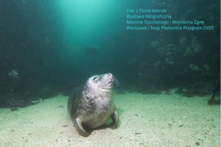 Foki z Farne Islands