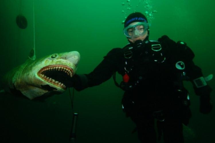 Edycie nie straszne są rekiny