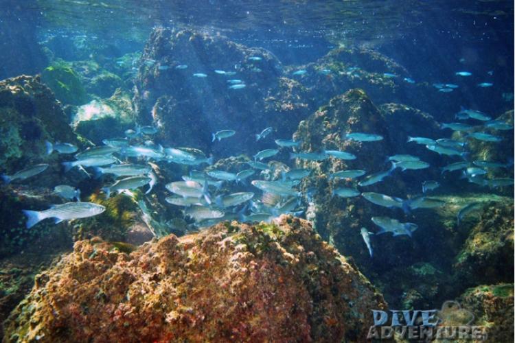 Podwodny Gibraltar - tapeta