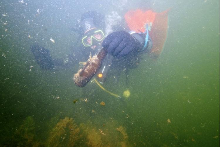 Czyszczenie Jeziora Dominickiego - pod wodą