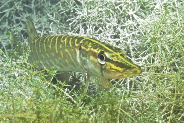 Opolski Eco Diving