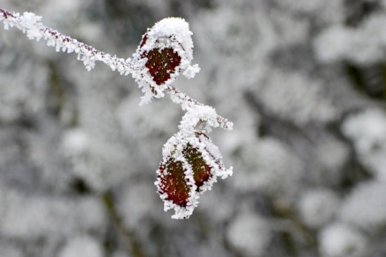 Zimowe spojrzenie przez szkło obiektywu