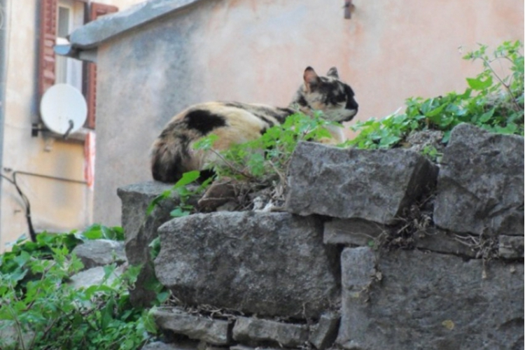 Kot na dalekiej obczyźnie