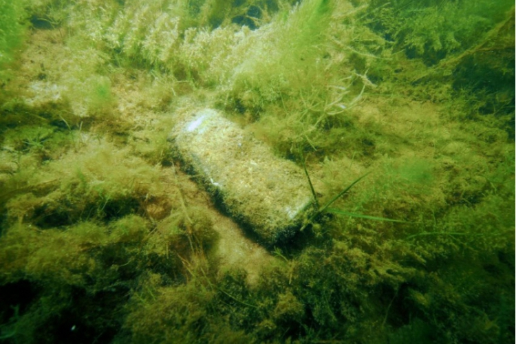 Czyścimy Jezioro Dominickie 2013