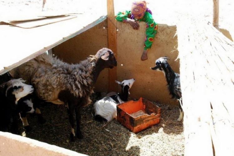 Najstarsza dziewczynka oprowadza nas po gospodarstwie Beduinów