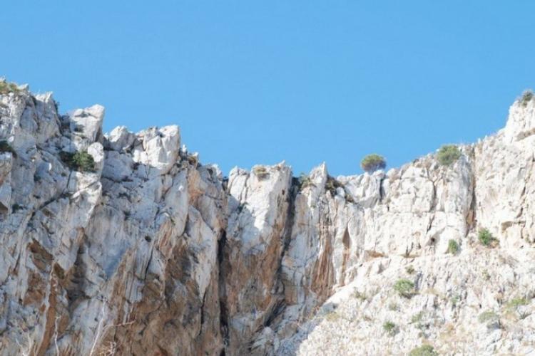 Mewy na Sycylii