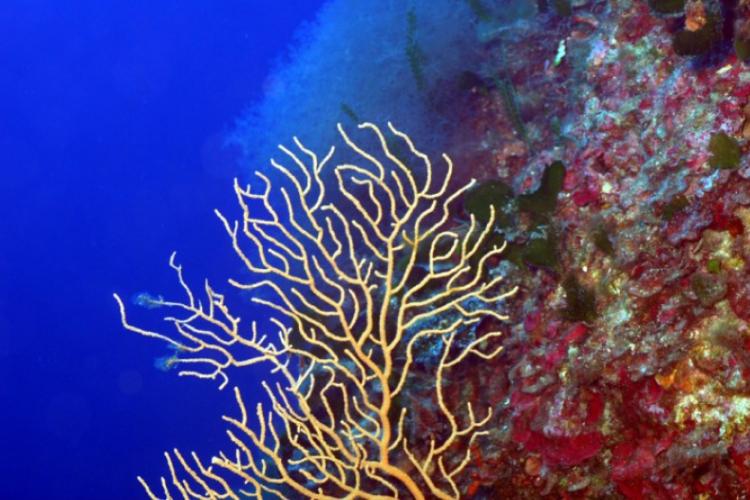 Koralowo