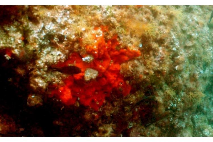 Czerwone korale z czerwonej jarzębiny