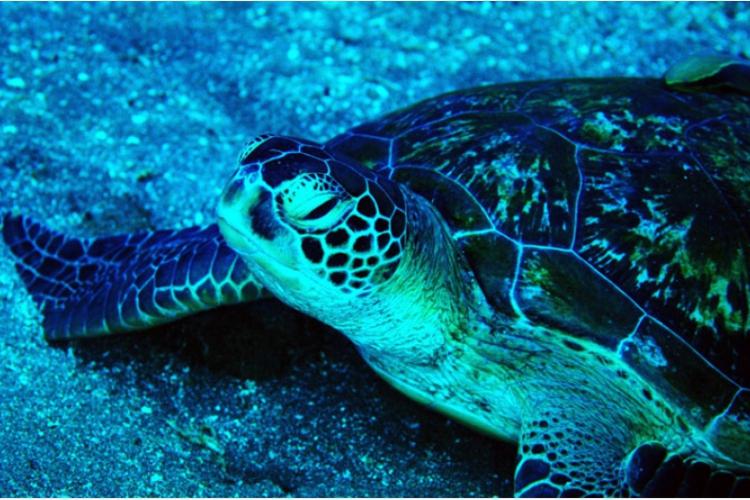 Napotkany żółw