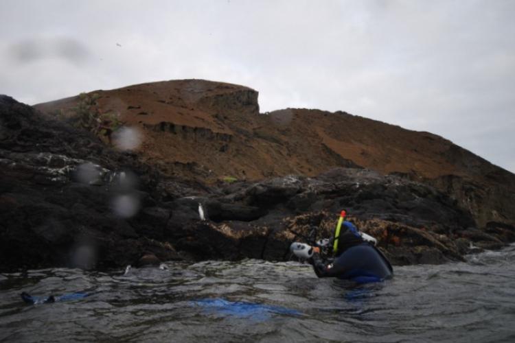 Pingwiny równikowe pozują nurkom do fotografii