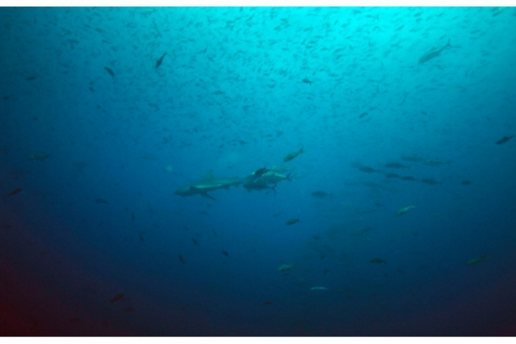 Ryby w toni