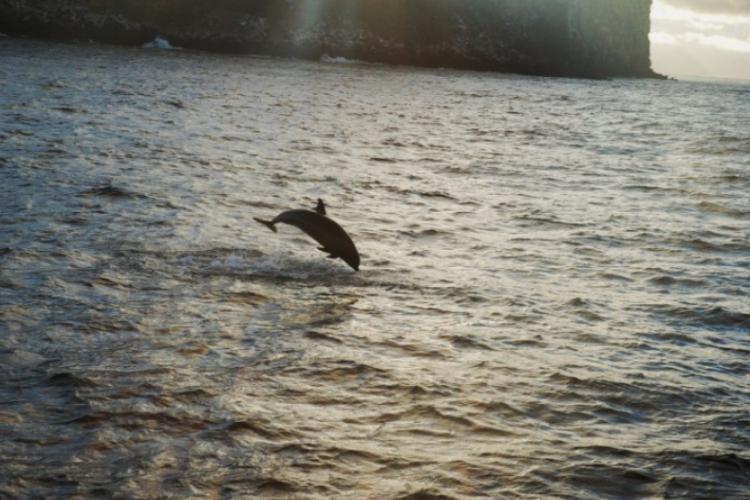 Delfiny niedaleko od burty statku