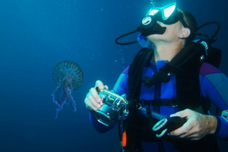 Nurek i meduza