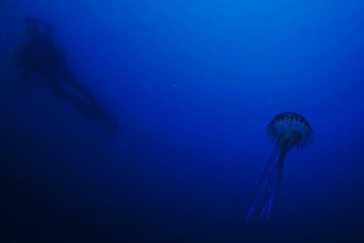Meduza w prawo, a nurek w lewo