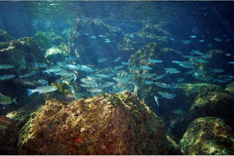 Podwodny Gibraltar
