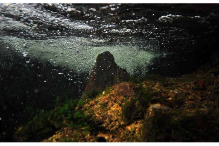 Wąwóz rzeki Traun