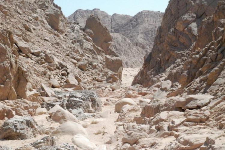 Tak wygląda pustynia