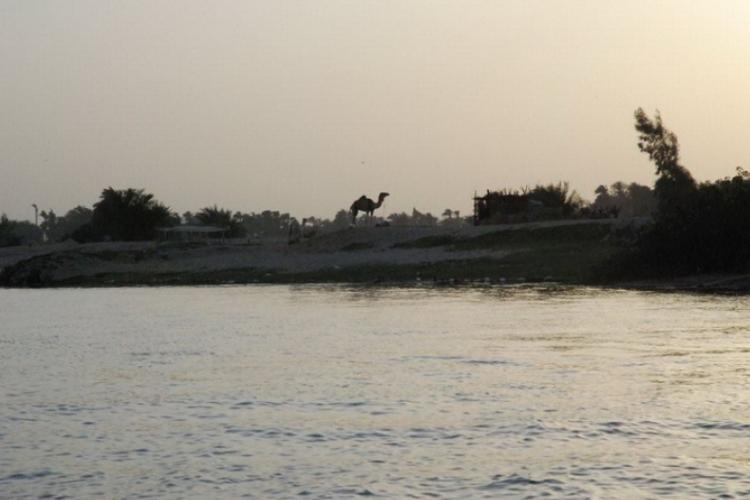 Widok wielbłąda nad Nilem