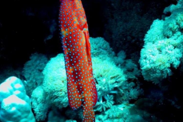 Graniec koralowy