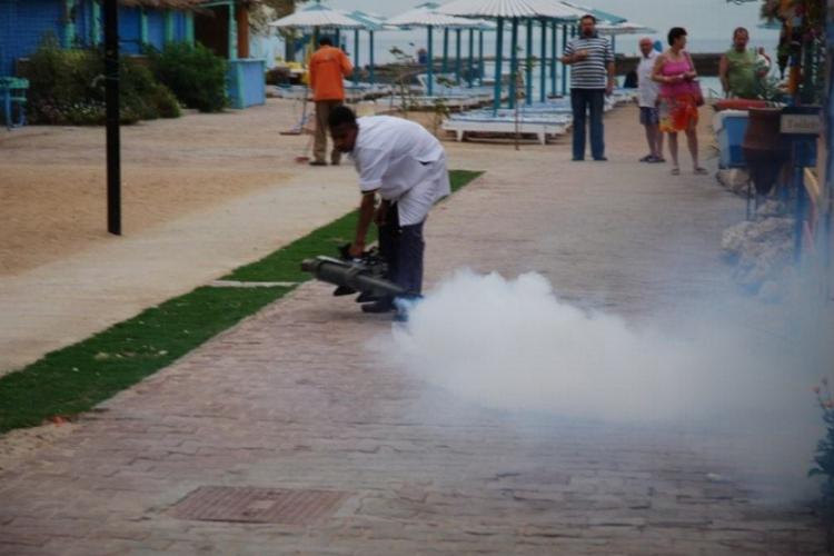 Egipcjanin rusza likwidować insekty na terenie przy hotelu