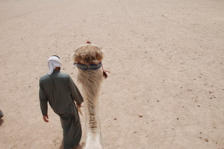 Beduin prowadzi wielbłąda, na którym sobie siedzę
