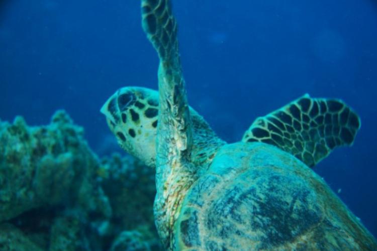 Żółw odlatuje