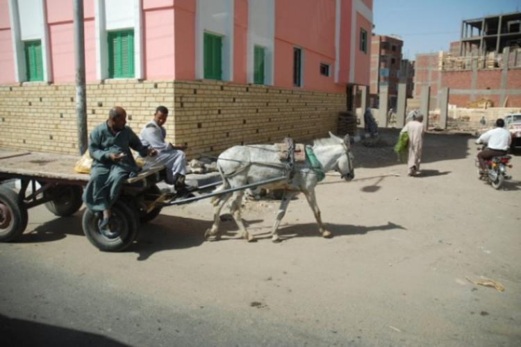 Osły to podstawa transportu