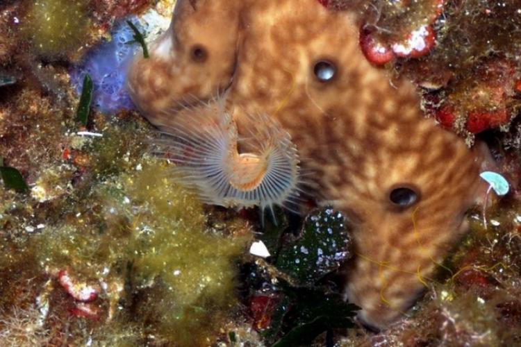 Podwodne dmuchawce