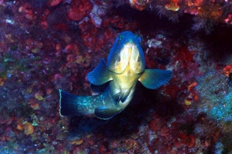 Ten grouper minie nas górą
