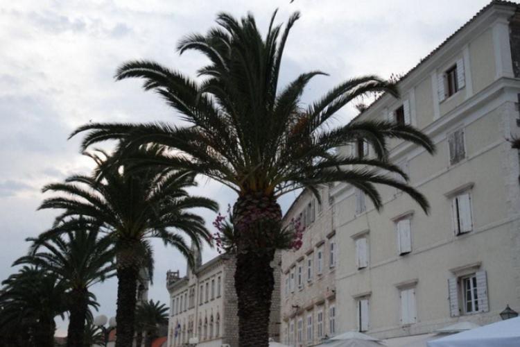 Palmy zdobią dojście do fortyfikacji