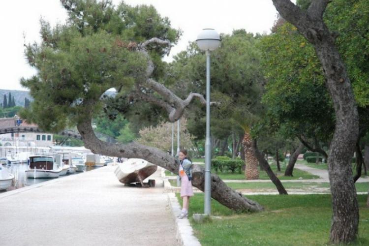 Śmiesznie wygięte drzewa są ciekawym tłem