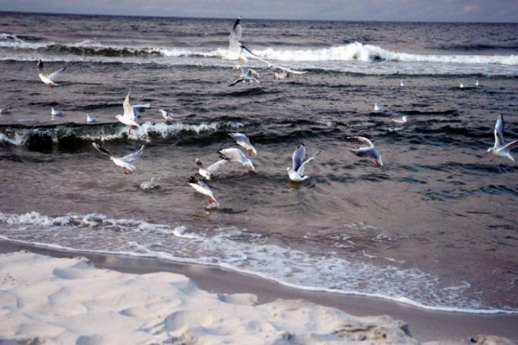 Mewy i rybiwy nad Bałtykiem