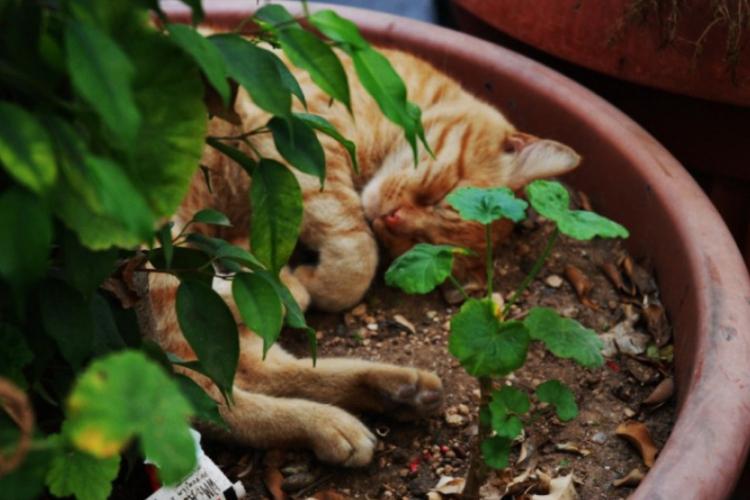 Koty szukają cienia, by się zdrzemnać