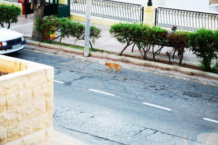 Koty na Malcie