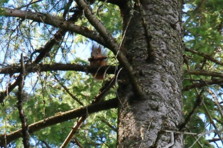 Wiewiórka na naszej wyspie, w okolicach Kokemaki