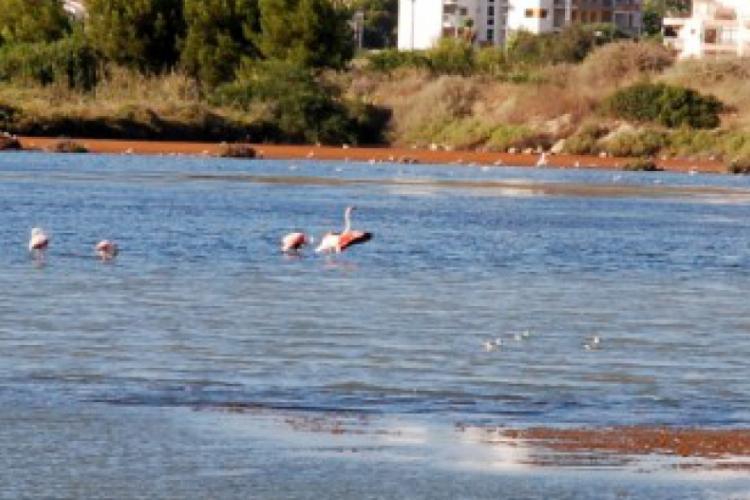 Calpe i flamingi w Europie na wolności