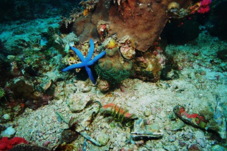 Filipiny 2009