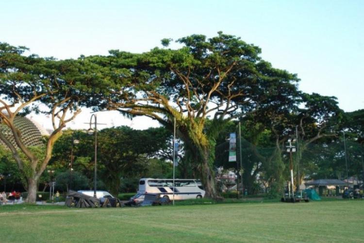 Fajne drzewa