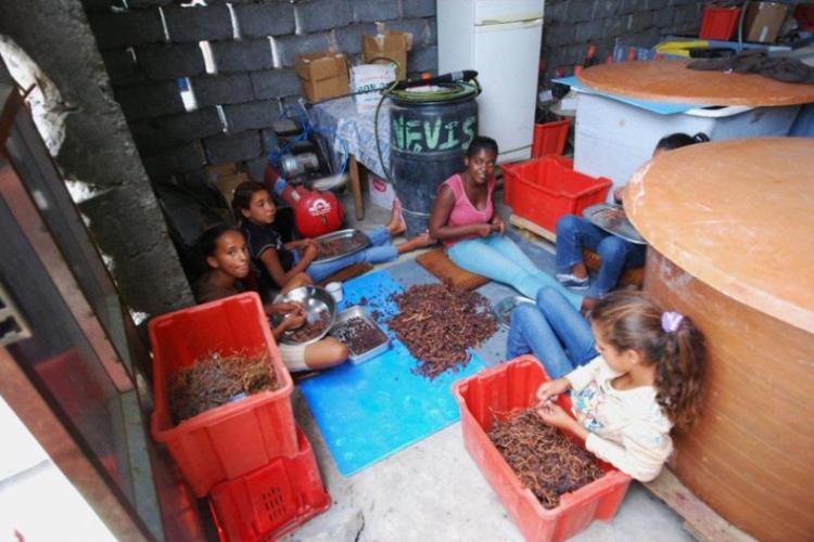 Dziewczyny przebierają winogrona na wino
