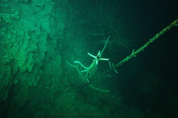 Zakrzówek 2009 - drzewo wyrastające z wyrobiska na 3 metrach