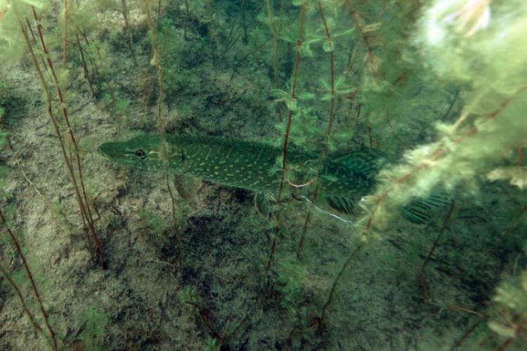 Jezioro Płocie zwane częściej Płotki