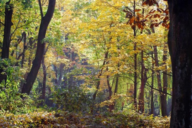 Nurkowa złota jesień