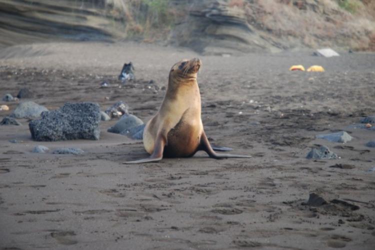 Galapagos 2008