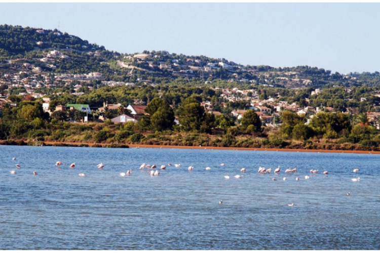 Calpe - flamingi