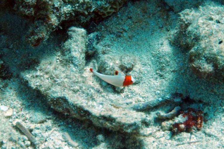 Izrael - podwodne eksploracje Ejlatu