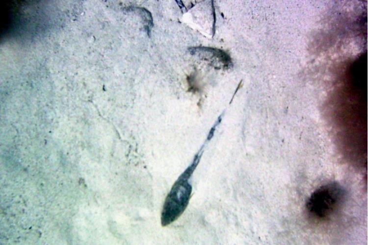 Zakopany jaszczurnik