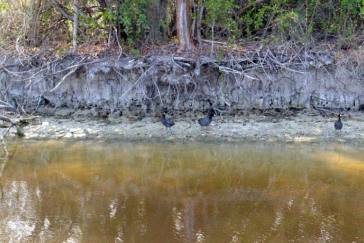 Everglades fot. Robert Spławski